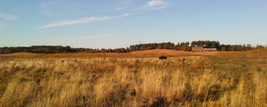 Nachusa Grasslands in the fall. Photo credit: Bethanne Bruninga-Socolar.
